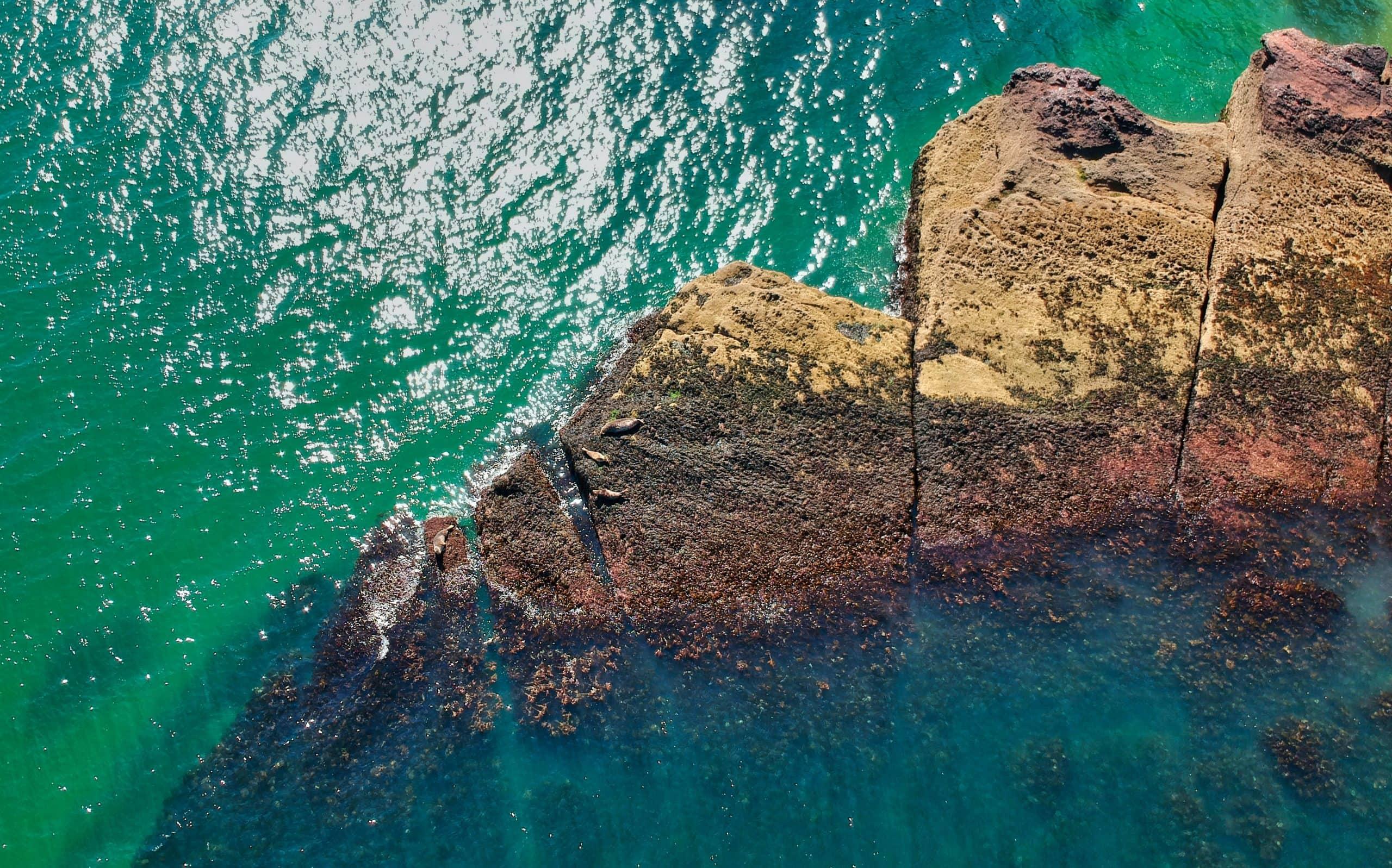 coasteering torquay